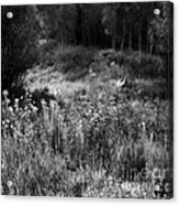 Black And White Dreams Acrylic Print