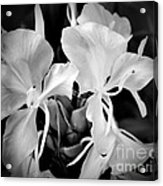 Black And White Hawaiian Ginger Flowers Acrylic Print
