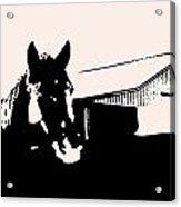 Black And White Horse Acrylic Print