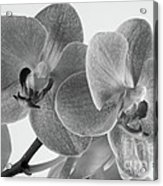 Black And White Orchid Acrylic Print