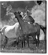 Black And White Photograph Of Montana Horses Acrylic Print