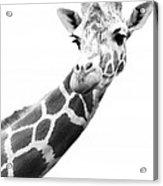 Black And White Portrait Of A Giraffe Acrylic Print