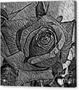 Black And White Rose Sketch Acrylic Print