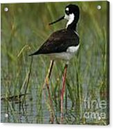 Black And White Stilt Acrylic Print