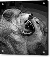 Black And White Wolf Fight Acrylic Print