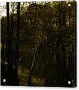 Black Bayou 18 Acrylic Print
