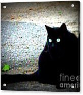 Black Cat Beauty Acrylic Print