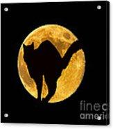 Black Cat Moon Acrylic Print