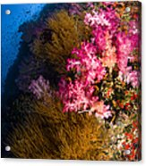 Black Coral And Soft Coral Seascape Acrylic Print