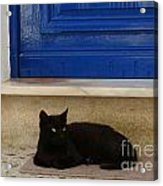 Black Greek Cat Acrylic Print