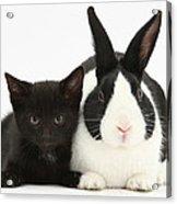 Black Kitten Dutch Rabbit Acrylic Print