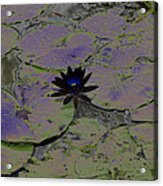 Black Lili Acrylic Print