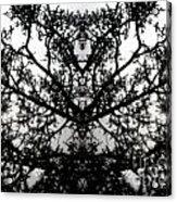 Black Mold Acrylic Print