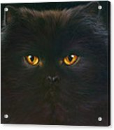 Black Persian Acrylic Print