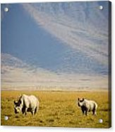 Black Rhinos Walking Across The Crater Acrylic Print