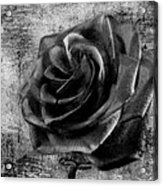 Black Rose Eternal  Bw Acrylic Print