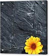 Black Schist Flower Acrylic Print by Carlos Caetano