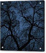 Black Veined Sky Acrylic Print