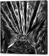 Black Velvet Acrylic Print