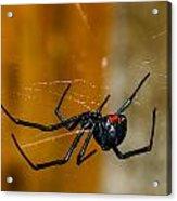 Black Widow Trap Acrylic Print by David Waldo