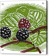 Blackberries, Woodcut Acrylic Print by Gary Hincks