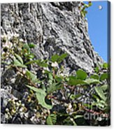Blackberry On The Rock 04 Acrylic Print