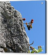 Blackberry On The Rock Top. Square Format Acrylic Print