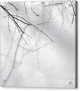 Blackberry Shadows No. 1 Acrylic Print