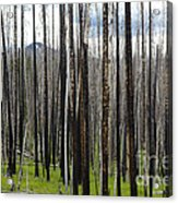 Blackened Forest  Acrylic Print