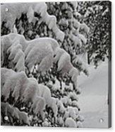 Blanket Of Snow Acrylic Print