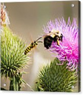 Blind Side Attack Acrylic Print