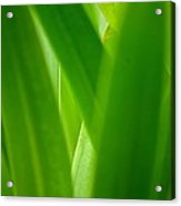 Blinding Green Acrylic Print