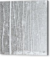 Blizzard Blankets Trees In Snow Acrylic Print
