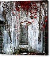Blood Ivy Acrylic Print