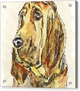 Bloodhound-watercolor Acrylic Print