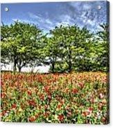 Bloomed Poppy Acrylic Print