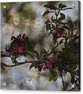 Blooming Branches Acrylic Print