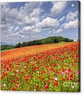 Blooming In The Plateau Acrylic Print