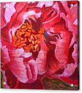Blooming Peony Acrylic Print