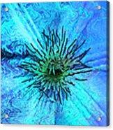 Blooming Ripples Acrylic Print