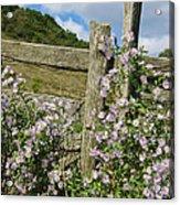 Blooming Season Acrylic Print by Victoria Ashley