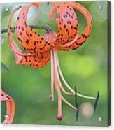 Blooming Tiger Acrylic Print