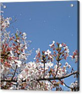 Blossom 4 Acrylic Print