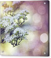 Blossom Acrylic Print by Joel Olives