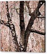 Blossom Rain Acrylic Print by Deborah  Crew-Johnson