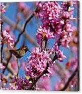 Blossoming Bird Acrylic Print