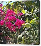 Blossoms And Breadfruit Acrylic Print
