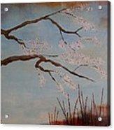 Blossoms Over The Lake Acrylic Print