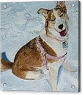 Blue - Siberian Husky Dog Painting Acrylic Print