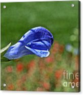 Blue Beacon Acrylic Print